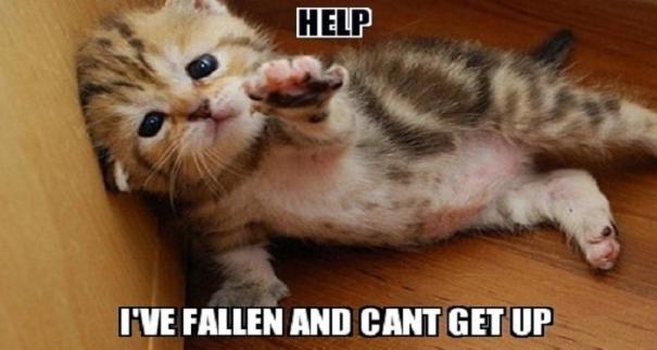 cat-fallen